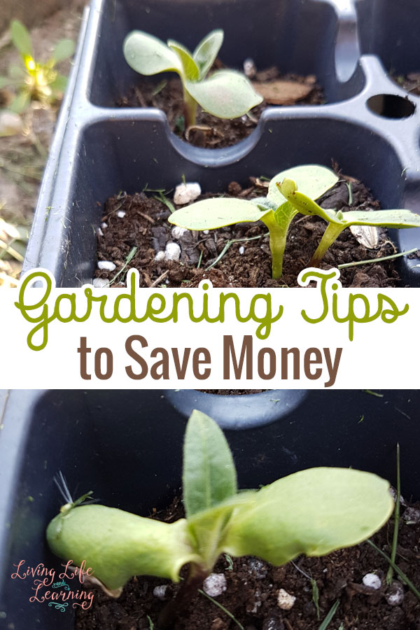 Gardening Tips to Save Money