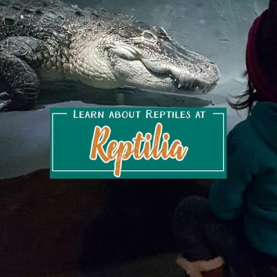 Learn About Reptiles at Reptilia