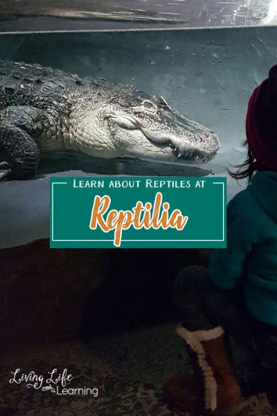 Learn about reptiles at Reptilia in Vaughn, Ontario. If you have animal lovers this is a great place to take them to explore and see them up close.